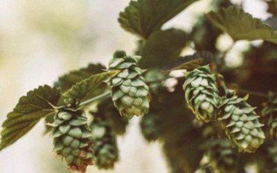 Transgraniczna promocja regionalnej kultury piwowarskiej