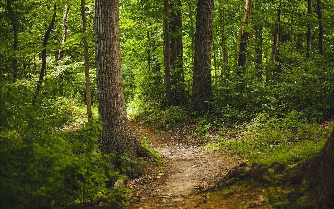 """Polsko- niemiecka wymiana doświadczeń """" Rozszerzenie oferty  rekreacyjno – uzdrowiskowej wEuroregionie Pomerania naprzykładzie lasu Uzdrowiskowo -Terapeutycznego wHeringsdorfie"""